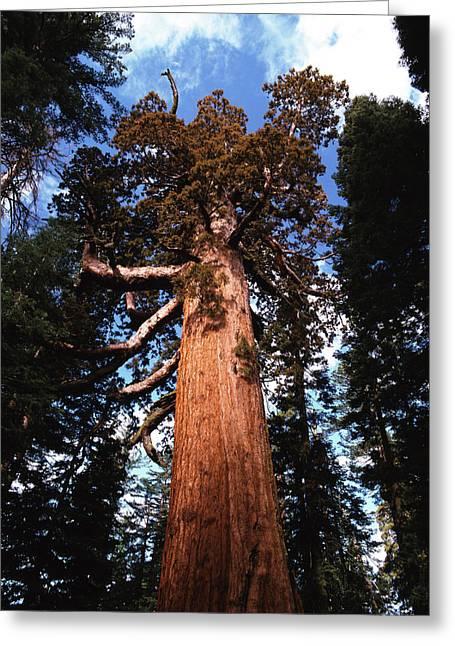 Usa, California, Yosemite National Greeting Card by Adam Jones