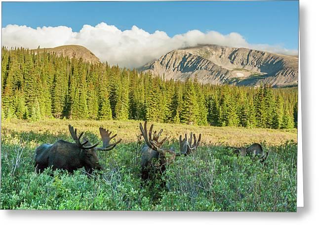 Usa, Colorado, Arapaho National Forest Greeting Card by Jaynes Gallery