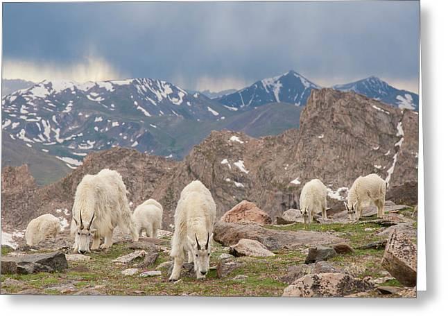 Usa, Colorado, Mt Greeting Card by Jaynes Gallery