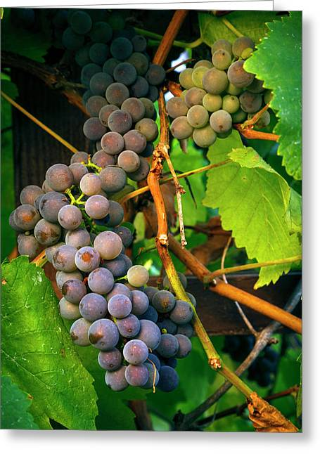 Usa, Oregon, Keizer, Pinot Gris Grapes Greeting Card by Rick A Brown