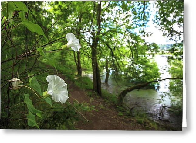 Usa, Oregon, Portland, Oak Bottoms Greeting Card