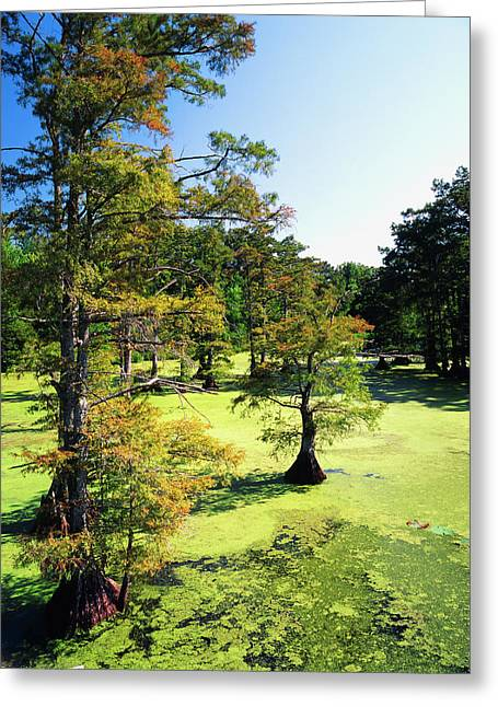 Usa, Tennessee, Reelfoot National Greeting Card by Adam Jones