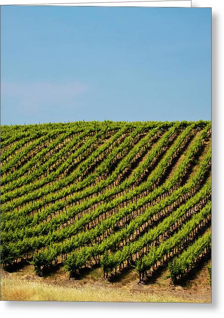 Usa, Washington, Rolling Vineyards Greeting Card by Terry Eggers