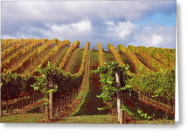 Vineyard At Napa Valley, California, Usa Greeting Card