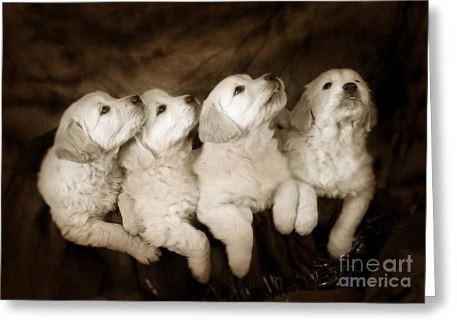 Vintage Festive Puppies Greeting Card by Angel  Tarantella