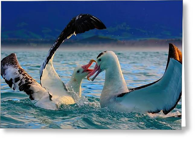 Wandering Albatross Greeting Card by Amanda Stadther