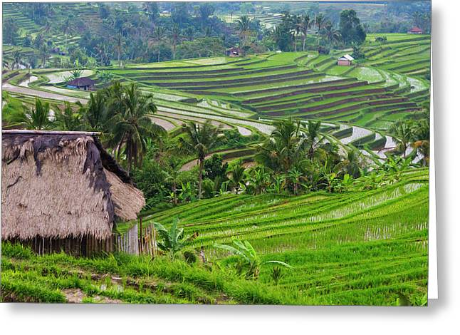 Water-filled Rice Terraces, Bali Greeting Card