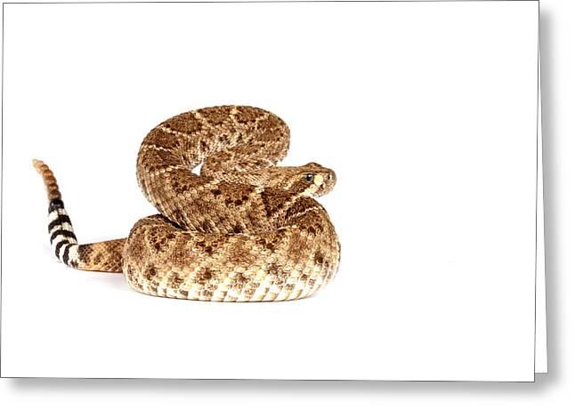 Western Diamondback Rattlesnake Greeting Card by John Bell