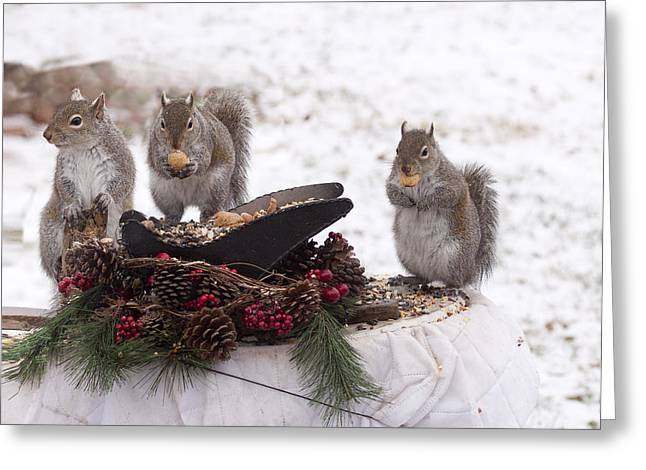 3 Wise Squirrels Greeting Card