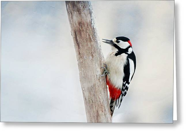 Woodpecker Greeting Card by Heike Hultsch