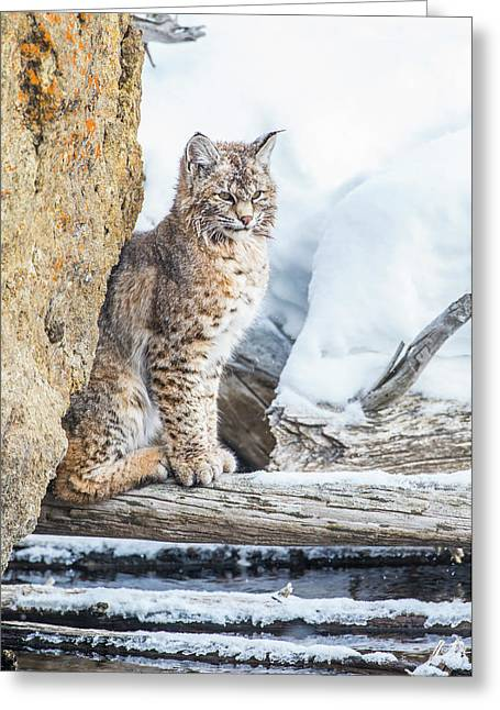 Wyoming, Yellowstone National Park Greeting Card