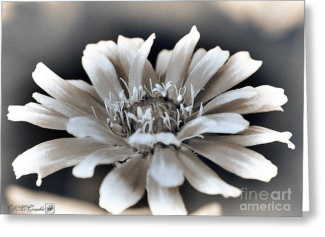 Zinnia From The Whirligig Mix Greeting Card