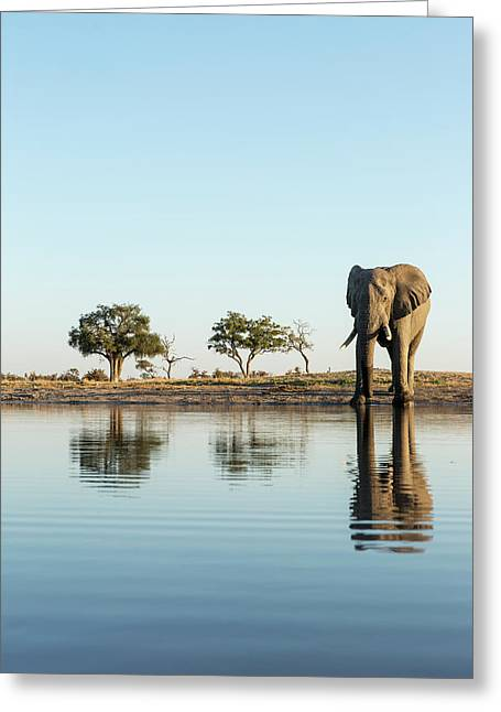 Africa, Botswana, Chobe National Park Greeting Card by Paul Souders