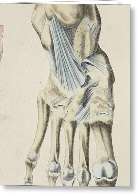 Anatomical Drawing Greeting Card