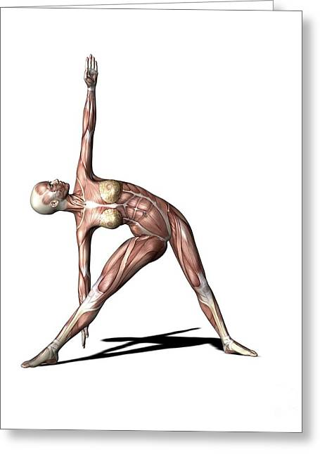 Female Muscles, Artwork Greeting Card by Friedrich Saurer