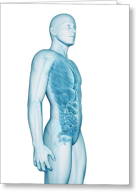 Human Anatomy Greeting Card by Sebastian Kaulitzki