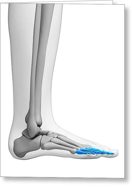 Human Foot Bones Greeting Card by Sebastian Kaulitzki