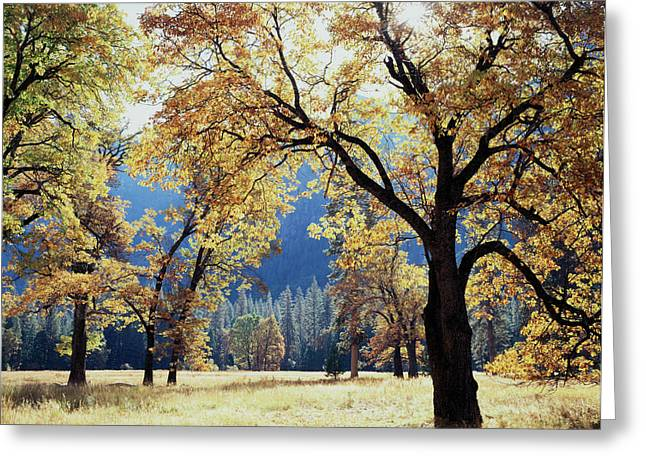 California, Sierra Nevada Mountains Greeting Card by Christopher Talbot Frank