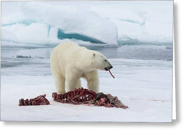 Norway, Svalbard Greeting Card by Jaynes Gallery