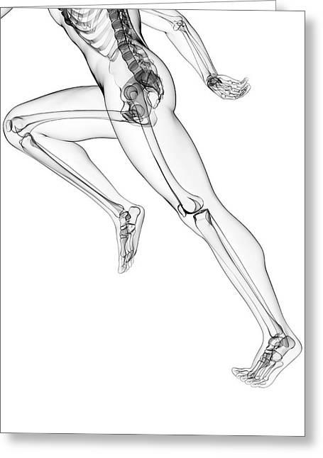 Skeletal System Of Runner Greeting Card by Sebastian Kaulitzki