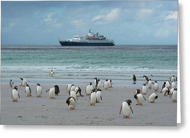 Falkland Islands Greeting Card by Inger Hogstrom