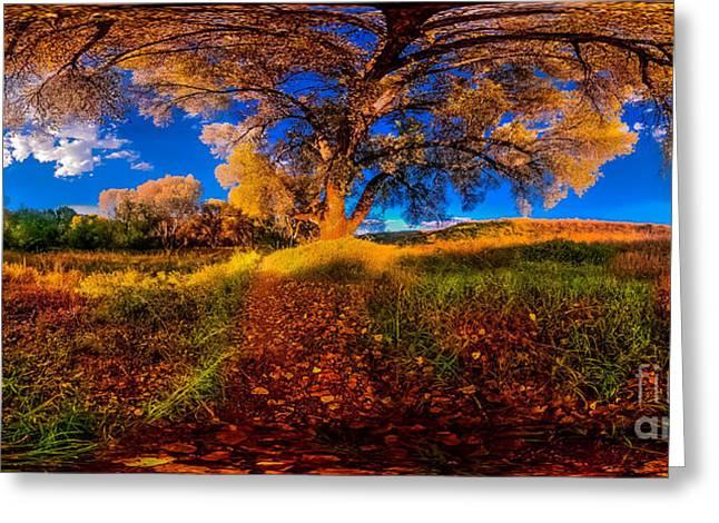 360 Under A Tree Greeting Card by Stephen Schwartzengraber