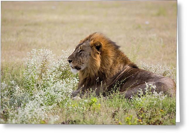 Africa, Namibia, Etosha National Park Greeting Card