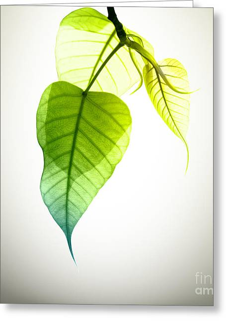 Pho Or Bodhi Greeting Card by Atiketta Sangasaeng