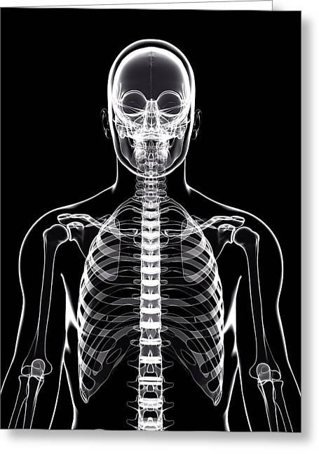 Human Skeleton Greeting Card by Pixologicstudio/science Photo Library