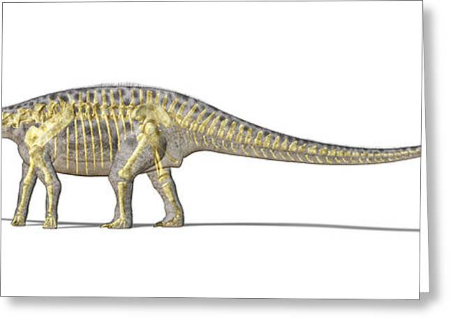 3d Rendering Of A Diplodocus Dinosaur Greeting Card by Leonello Calvetti