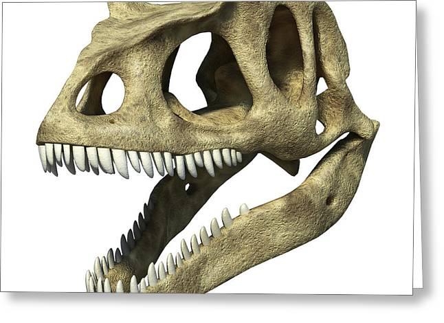 3d Rendering Of An Allosaurus Skull Greeting Card by Leonello Calvetti
