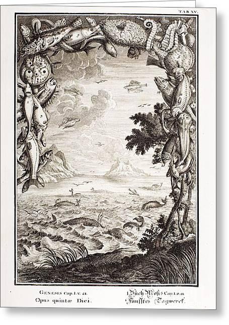 5th Day Of Creation, Scheuchzer, 1731 Greeting Card