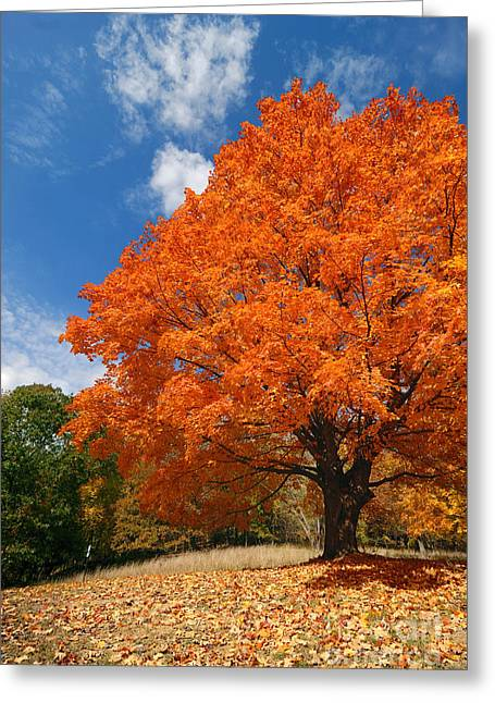 A Blanket Of Fall Colors Greeting Card by Amy Cicconi