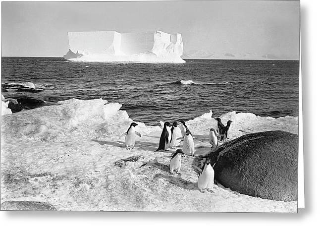Adelie Penguins In Antarctica Greeting Card by Scott Polar Research Institute
