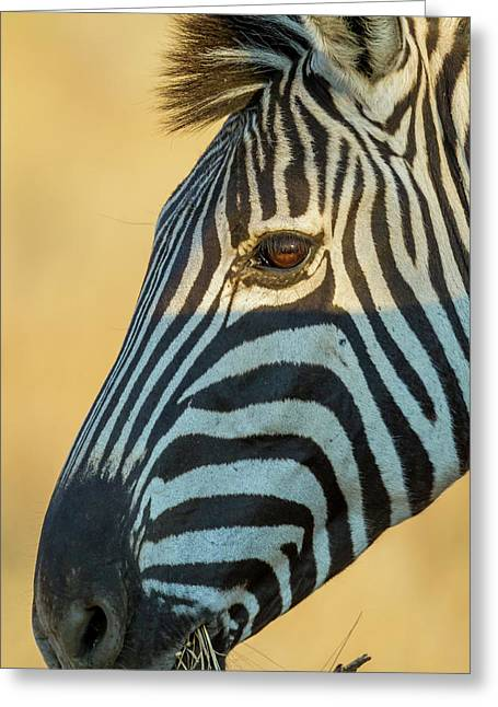 Africa, South Africa, Londolozi Private Greeting Card