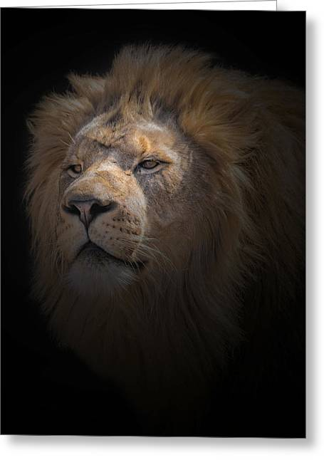 Greeting Card featuring the photograph African Lion by Peter Lakomy