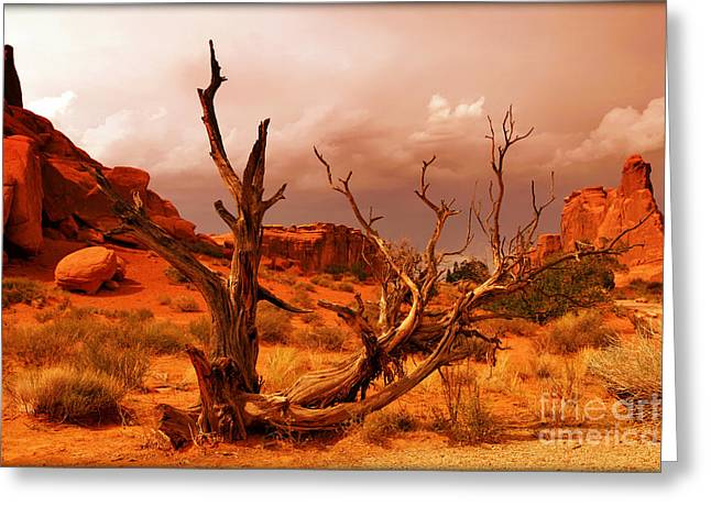 Arches National Park Greeting Card by Sophie Vigneault