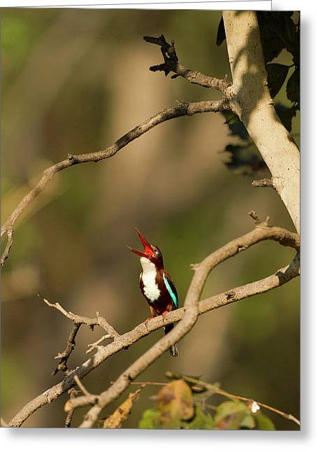 Asia, India, Pench National Park Greeting Card
