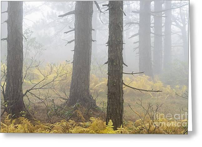 Autumn Fog Dolly Sods Greeting Card by Thomas R Fletcher