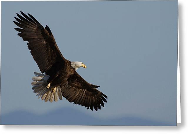 Bald Eagle Greeting Card by Ken Archer