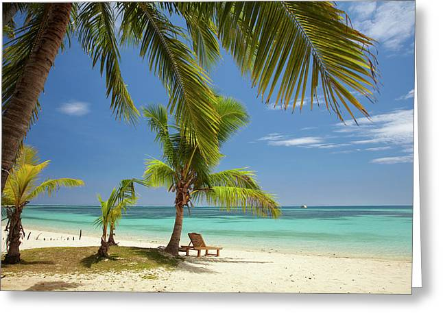 Beach, Palm Trees And Lounger Greeting Card by David Wall