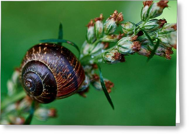 Copse Snail Greeting Card by Jouko Lehto