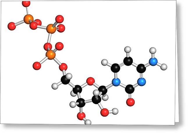 Cytidine Triphosphate Molecule Greeting Card by Molekuul