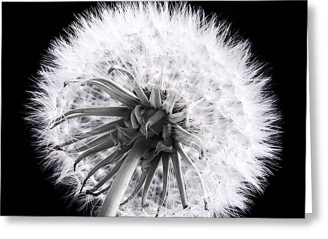 Dandelion Greeting Card by Elena Elisseeva