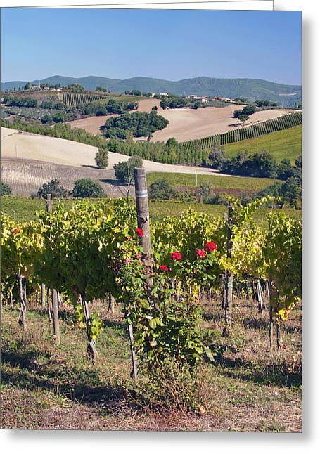 Europe, Italy, Umbria, Near Montefalco Greeting Card by Rob Tilley