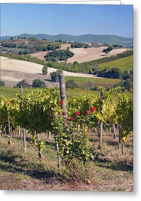 Europe, Italy, Umbria, Near Montefalco Greeting Card