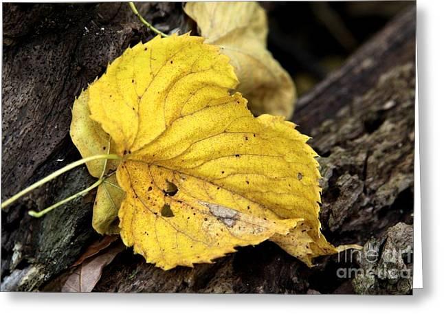 Fall Greeting Card by Rick Rauzi