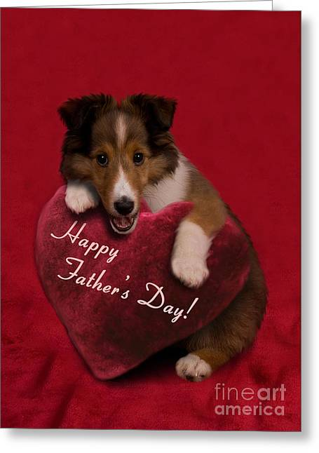 Father's Day Sheltie Puppy Greeting Card by Jeanette K