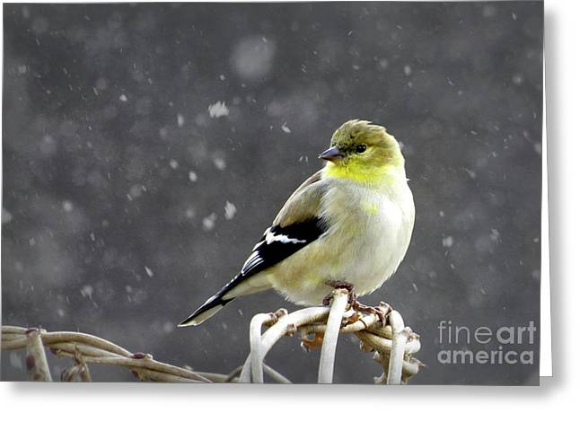 Greeting Card featuring the photograph Goldfinch by Brenda Bostic