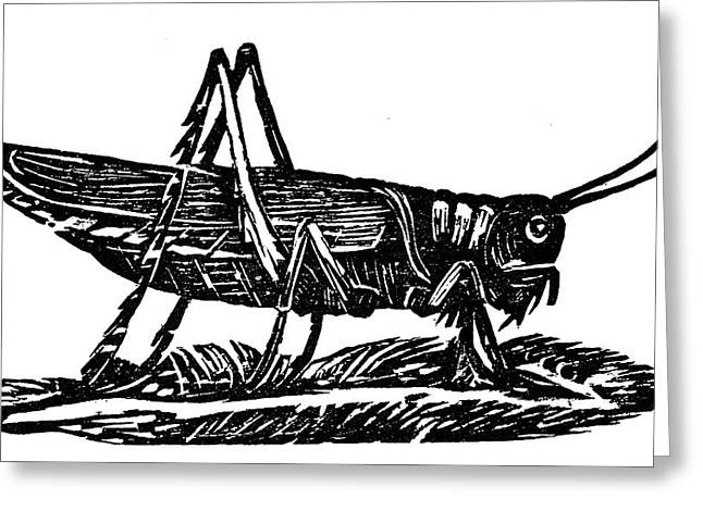 Grasshopper Greeting Card by Granger